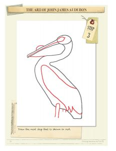 Drawing Instructions American White Pelican by John James Audubon Step 3