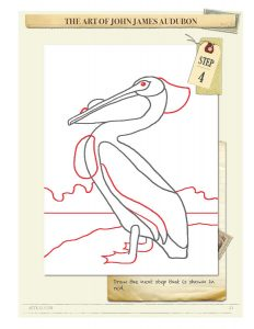Drawing Instructions American White Pelican by John James Audubon Step 4