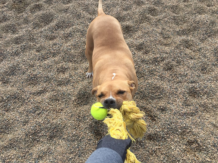 Nala  I want it all and you can't have itPrescott Valley  Arizona