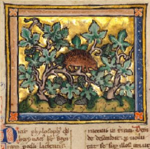 Hedgehog in a grapevine from an illuminated bestiary
