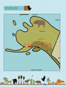 Draw the Natural Wonders of the USA: Alaska Instructions with Grizzly Bear